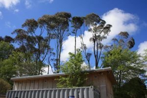 Section-dismantling-structural-reduction-atx-tree-services