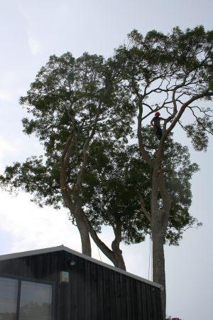 building-locked-tree-tops