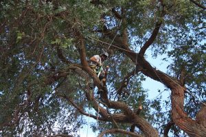 gum-tree-removal-interior-structure-arbortechnix-tree-work