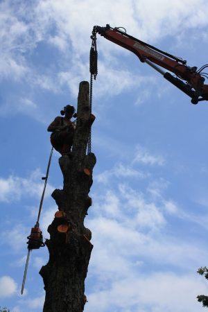 hiab-demolition-crane-removal-auckland-tree-works