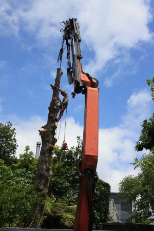 hiab-tree-removal-auckland-tree-services
