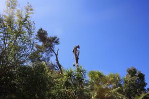 manuka-dismantle-skyline-atx-tree-services
