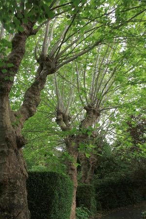 plane-pollard-before-tree-services-auckland