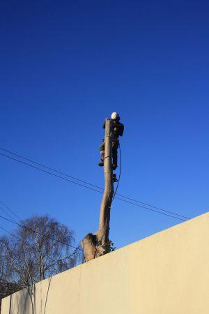 pole-dismantle-auckland-tree-services
