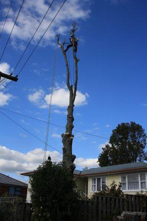 tree-demolition-atx-auckland-tree-contracting