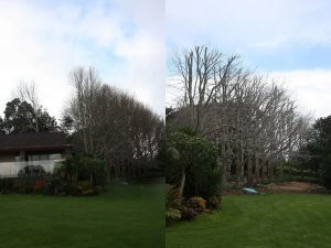 avenue-reduction-before-after-combined