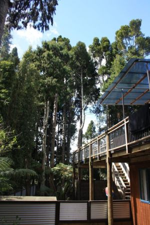 kauri-thinning-project-after