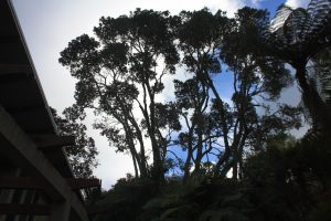 pohutukawa-bush-thinning-after
