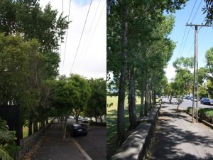 ponsonby-power-line-clearance-combined