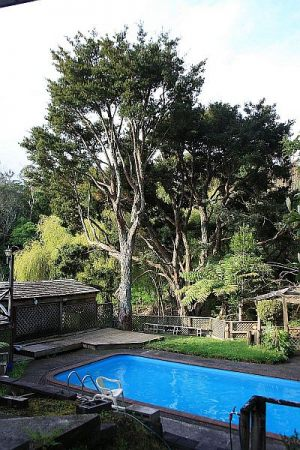 totara-thinning-operations-after
