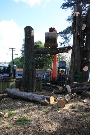 digger-timber-excavation-atx-tree-work-auckland