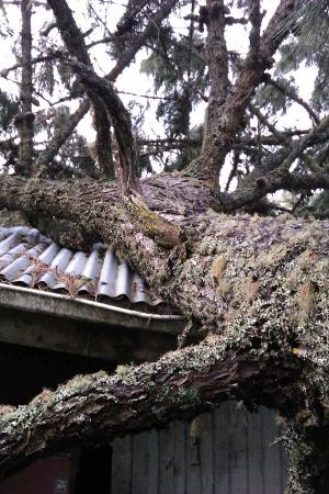 failed-pine-emergency-response-atx