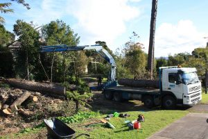 site-clearance-auckland-tree-services