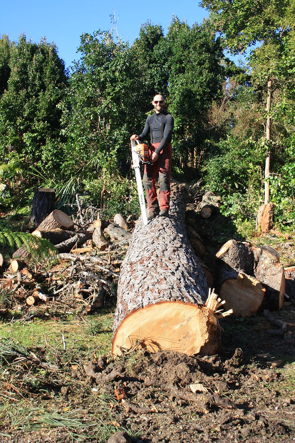 Pine trunk felled auckland tree services
