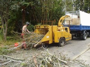 chipping-machinery-auckland-tree-removal